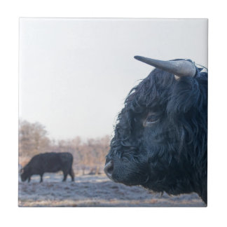 Head of black bull scottish highlander with cow tile