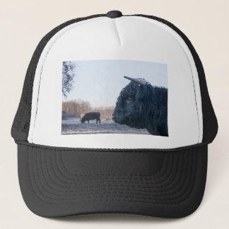 Head of black bull scottish highlander with cow trucker hat