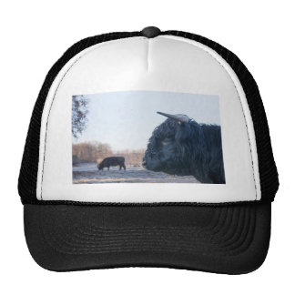 Head of black bull scottish highlander with cow trucker hat