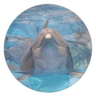 Head of  bottlenose dolphin dinner plates