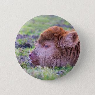 Head of brown newborn scottish highlander calf 2 inch round button