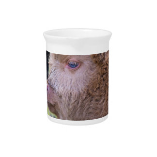 Head of Brown newborn scottish highlander calf Beverage Pitchers