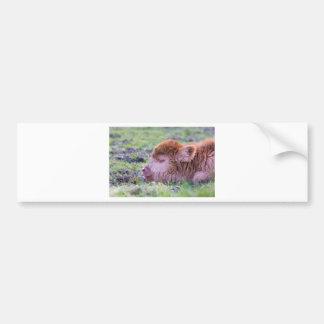 Head of brown newborn scottish highlander calf bumper sticker