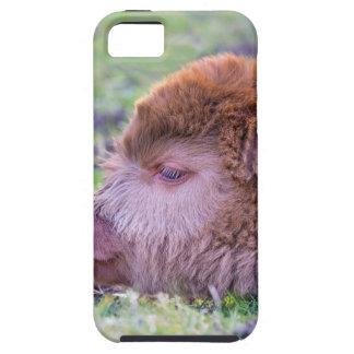Head of brown newborn scottish highlander calf case for the iPhone 5