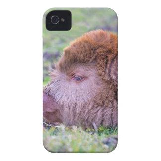 Head of brown newborn scottish highlander calf iPhone 4 Case-Mate cases