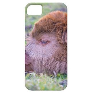 Head of brown newborn scottish highlander calf iPhone 5 case