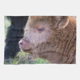 Head of Brown newborn scottish highlander calf Kitchen Towel