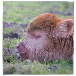 Head of brown newborn scottish highlander calf napkins