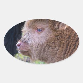 Head of Brown newborn scottish highlander calf Oval Sticker