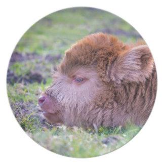 Head of brown newborn scottish highlander calf party plates