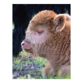 Head of Brown newborn scottish highlander calf Personalized Letterhead