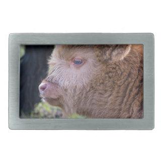 Head of Brown newborn scottish highlander calf Rectangular Belt Buckles
