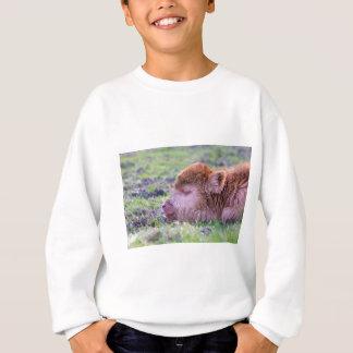 Head of brown newborn scottish highlander calf sweatshirt
