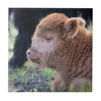 Head of Brown newborn scottish highlander calf Tile