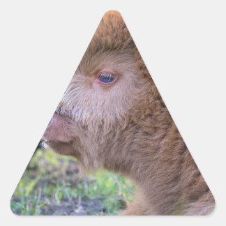 Head of Brown newborn scottish highlander calf Triangle Sticker