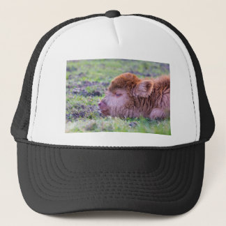 Head of brown newborn scottish highlander calf trucker hat