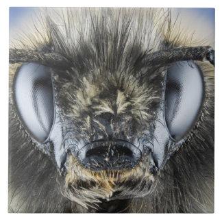 Head of bumblebee tiles