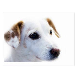 Head of dog postcard