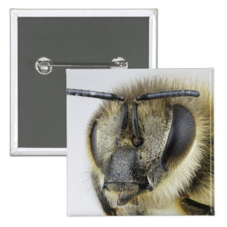 Head of honeybee 2 inch square button