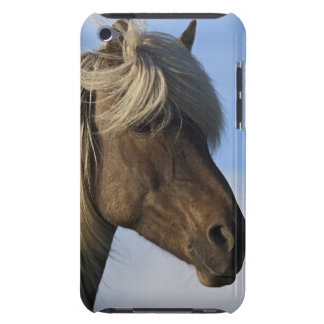 Head of Icelandic horse, Iceland Barely There iPod Cases