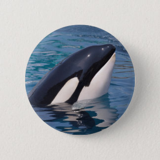 Head of killer whale 2 inch round button