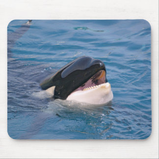 Head of killer whale mouse pad