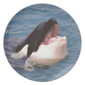 Head of killer whale party plates