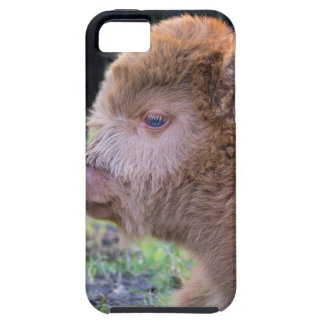 Head of lying Brown newborn scottish highlander Case For The iPhone 5