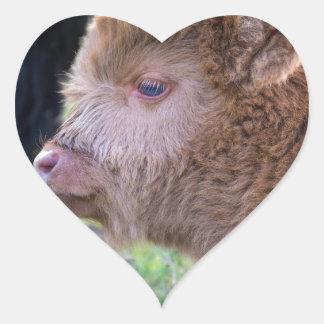 Head of lying Brown newborn scottish highlander Heart Sticker
