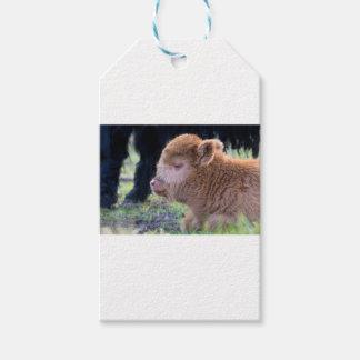 Head of lying Brown newborn scottish highlander Pack Of Gift Tags