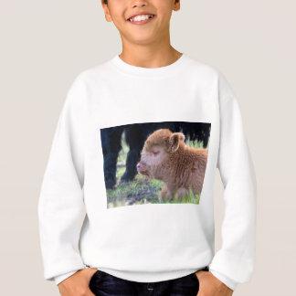 Head of lying Brown newborn scottish highlander Sweatshirt