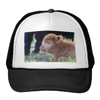 Head of lying Brown newborn scottish highlander Trucker Hat