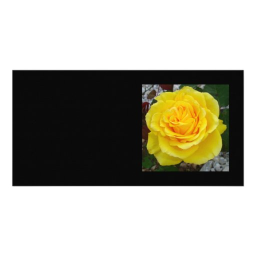 Head On View Of A Yellow Rose With Garden Backgrou Photo Greeting Card