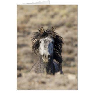 Head On Wild Horse Greeting Card