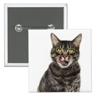 Head shot of a male domestic tabby cat licking 2 inch square button