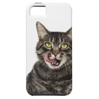 Head shot of a male domestic tabby cat licking iPhone 5 case