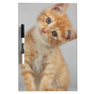 Head Tilt Kitten Dry Erase Board