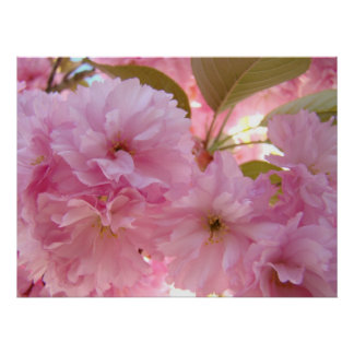 HEALING TOUCH ART Gifts PINK BLOSSOMS Spring Poster