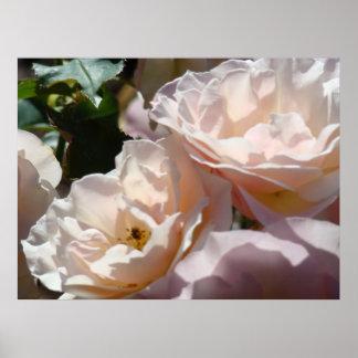Healing Touch Art Prints Soft Pink Roses Garden Poster