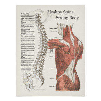 Healthy Spine, Strong Body Chiropractic Poster
