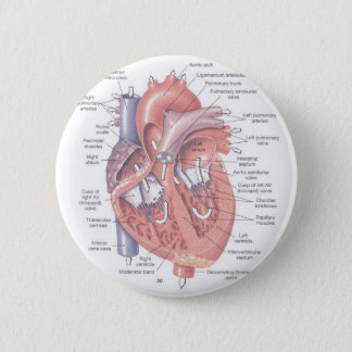 Heart Anatomy 2 Inch Round Button