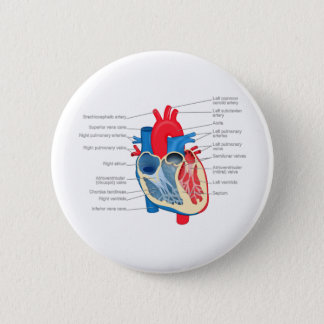 Heart_Anatomy 2 Inch Round Button