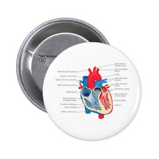 Heart_Anatomy 2 Inch Round Button