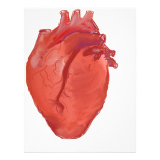 Heart Anatomy design Letterhead