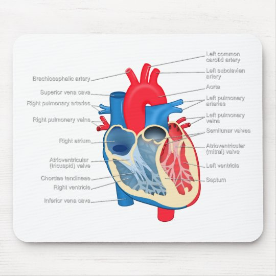 Heart_Anatomy Mouse Pad