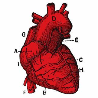 Heart – Cut Out Sculpture