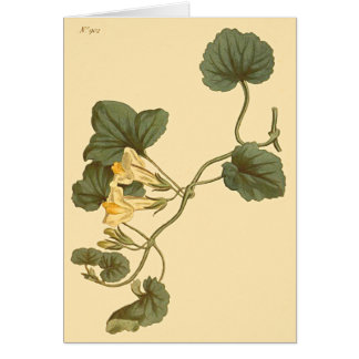 Heart-Leaved Snapdragon Botanical Illustration Card