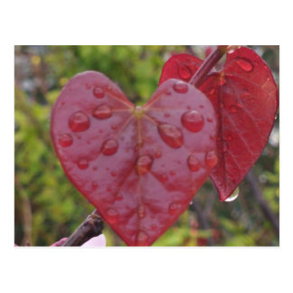 Heart Leaves Red Postcard