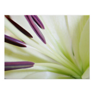 Heart of the Lily Fine Art Floral Photography Poster