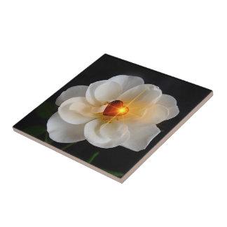 heart on white rose tiles